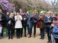 Kirschblüte IMG_3017
