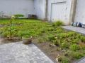 Garten am 24-09-2017 (2)