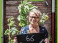Projekt: 60 Sonnenblumen