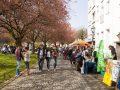 kirschbluetenfest-2018 (25)